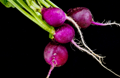 Purple Plum Radish from West Central Food Service