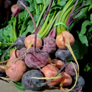 County Line Harvest Baby Mixed Beets