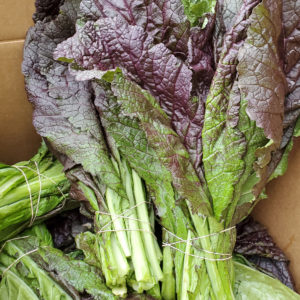 Flora Bella Farms Mustard Greens