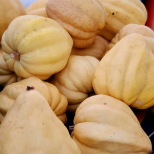 Windrose Farms White Acorn Squash